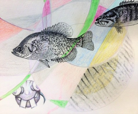 5fish2